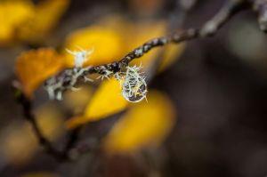 Delicate-droplet.jpg